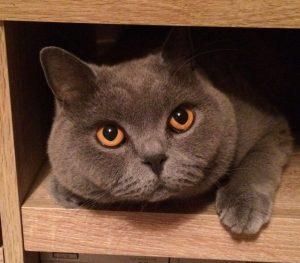 My beautiful girl cat Poppett