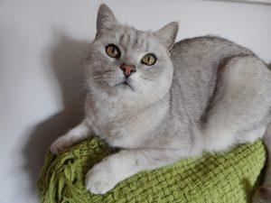 Top cat – Pepper